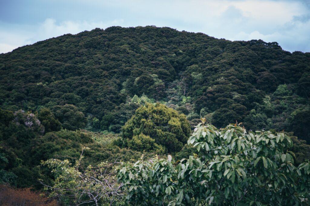 Dunedins hidden forest retreat is utterly divine