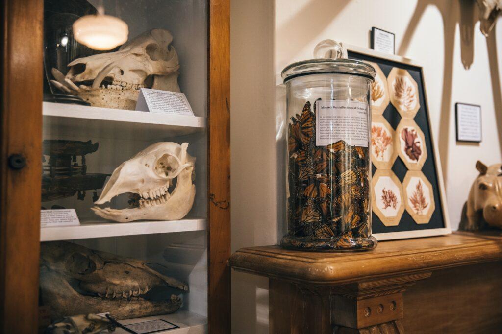 New Zealand quirkiest museum