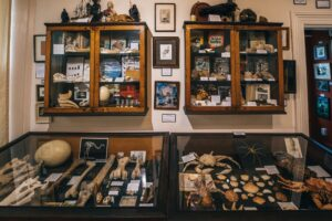 Read more about the article New Zealand quirkiest museum is full of mystery (and bones)