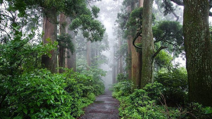 Best The First Trip to Japan Guide Hakone Boulevard in Hakone