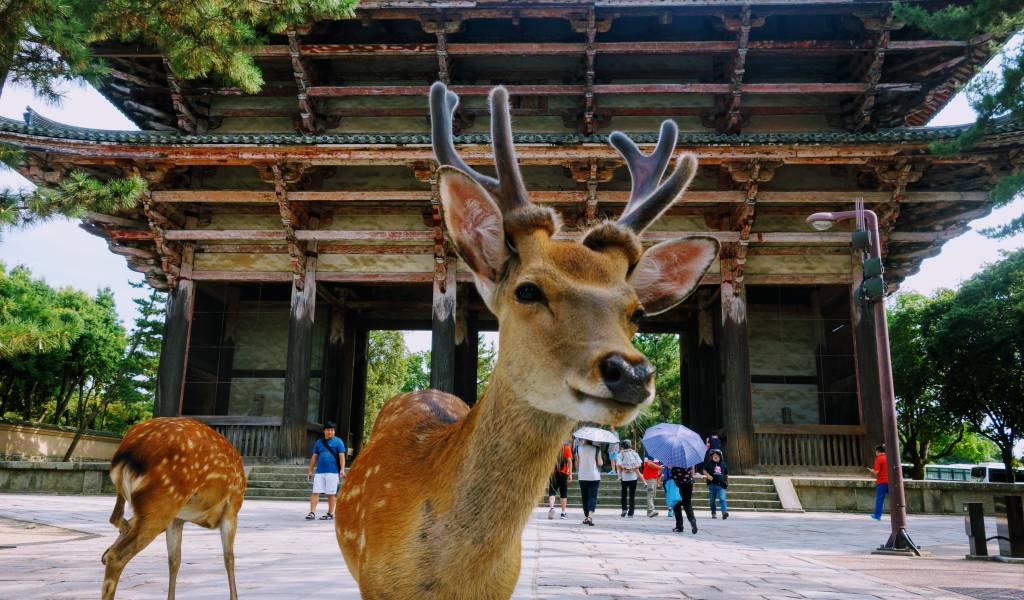 Best The First Trip to Japan Guide Nara Deer